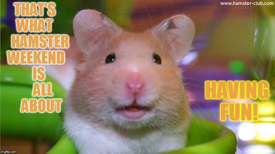 Thats What Hamster Weekend Is All About Having Fun