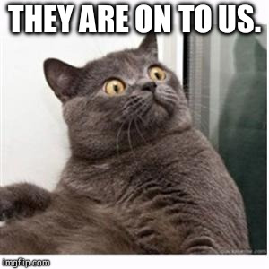 Conspiracy Cat | THEY ARE ON TO US. | image tagged in conspiracy cat | made w/ Imgflip meme maker