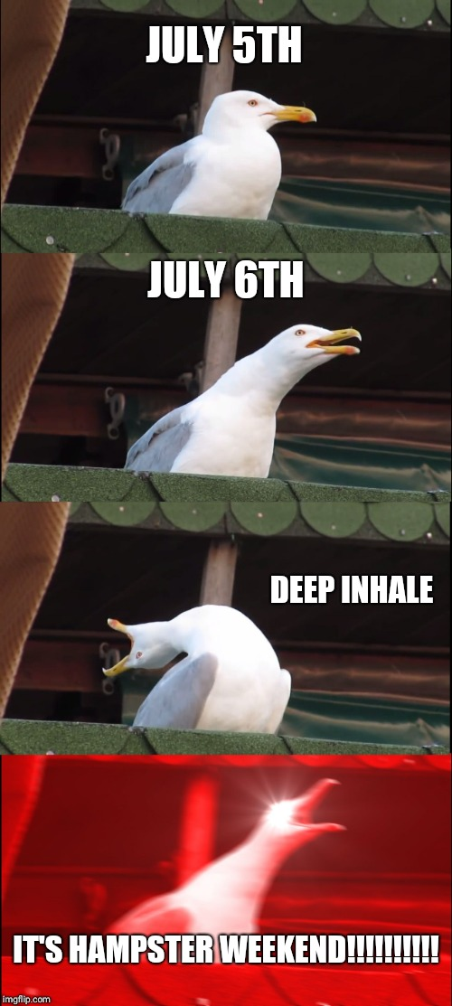 Inhaling Seagull Meme | JULY 5TH JULY 6TH DEEP INHALE IT'S HAMPSTER WEEKEND!!!!!!!!!! | image tagged in memes,inhaling seagull | made w/ Imgflip meme maker