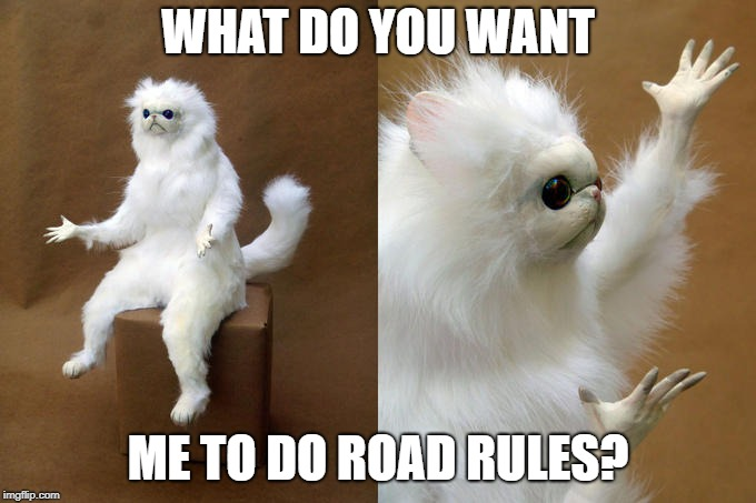 Persian Cat Room Guardian Meme | WHAT DO YOU WANT ME TO DO ROAD RULES? | image tagged in memes,persian cat room guardian | made w/ Imgflip meme maker