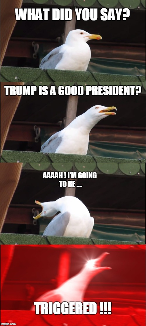 Triggered Seagull | WHAT DID YOU SAY? TRUMP IS A GOOD PRESIDENT? AAAAH ! I'M GOING TO BE .... TRIGGERED !!! | image tagged in memes,president trump,triggered | made w/ Imgflip meme maker