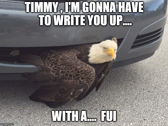 Drunk Eagle | TIMMY , I'M GONNA HAVE TO WRITE YOU UP.... WITH A....  FUI | image tagged in eagle | made w/ Imgflip meme maker