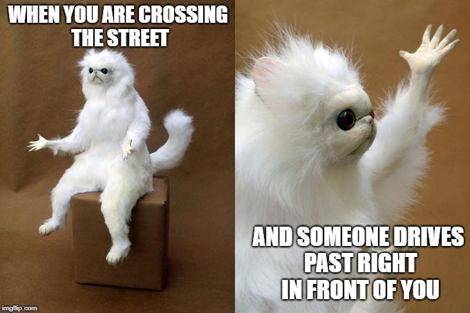 I'm right here people! | WHEN YOU ARE CROSSING THE STREET AND SOMEONE DRIVES PAST RIGHT IN FRONT OF YOU | image tagged in memes,persian cat room guardian,driving,bad drivers,crossing,what the heck | made w/ Imgflip meme maker