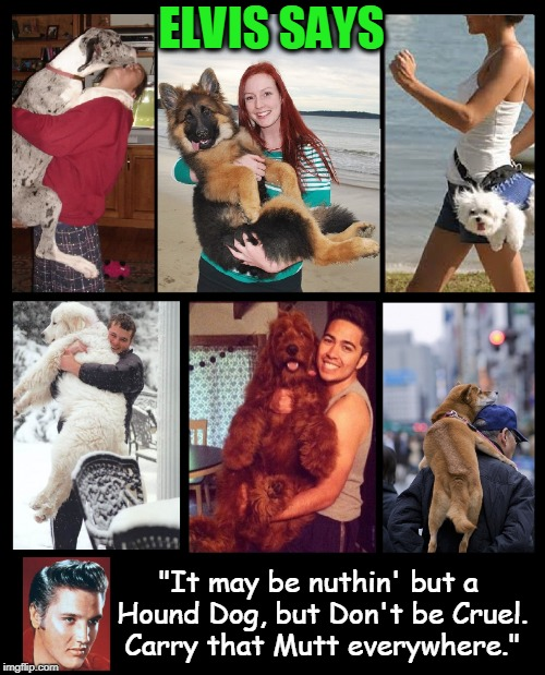 "Elvis Sanctions Dog Carrying | ELVIS SAYS ""It may be nuthin' but a Hound Dog, but Don't be Cruel. Carry that Mutt everywhere."" 