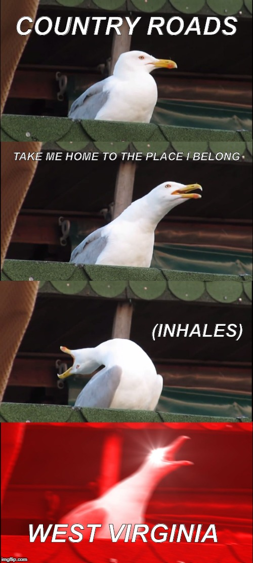 Inhaling Seagull Meme | COUNTRY ROADS TAKE ME HOME TO THE PLACE I BELONG (INHALES) WEST VIRGINIA | image tagged in memes,inhaling seagull | made w/ Imgflip meme maker
