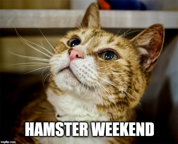 What hamster? | HAMSTER WEEKEND | image tagged in hamster,hamster weekend,what,what happened,and at this point i am to afraid to ask,cat | made w/ Imgflip meme maker
