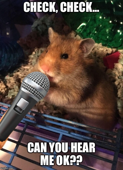 Let's get this party started  | CHECK, CHECK... CAN YOU HEAR ME OK?? | image tagged in funny meme,hamster weekend,party,celebration,hamster dance | made w/ Imgflip meme maker