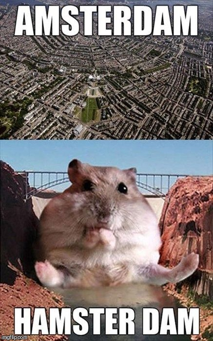 Hamster Weekend July 6-8, a bachmemeguy2, 1forpeace & Shen_Hiroku_Nagato event! |  AMSTERDAM; HAMSTERDAM | image tagged in jbmemegeek,hamster weekend,cute animals,memes | made w/ Imgflip meme maker