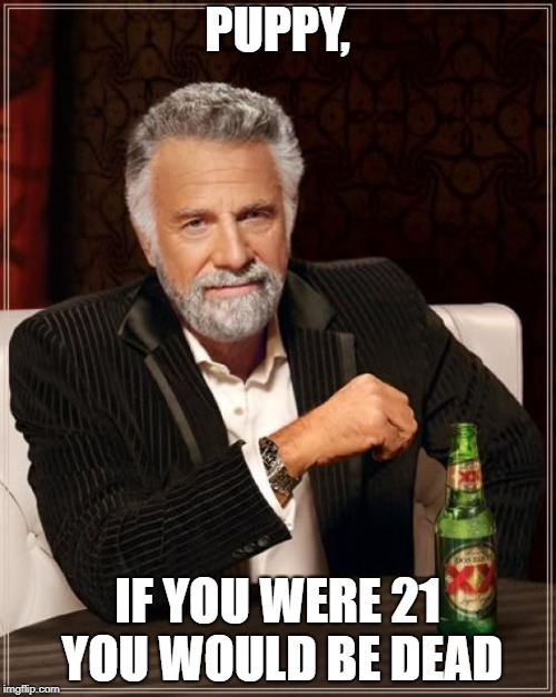 The Most Interesting Man In The World Meme | PUPPY, IF YOU WERE 21 YOU WOULD BE DEAD | image tagged in memes,the most interesting man in the world | made w/ Imgflip meme maker