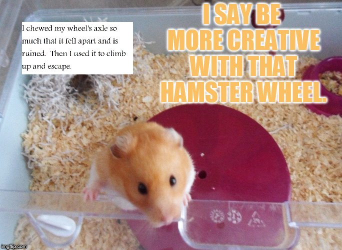 I SAY BE MORE CREATIVE WITH THAT HAMSTER WHEEL. | made w/ Imgflip meme maker