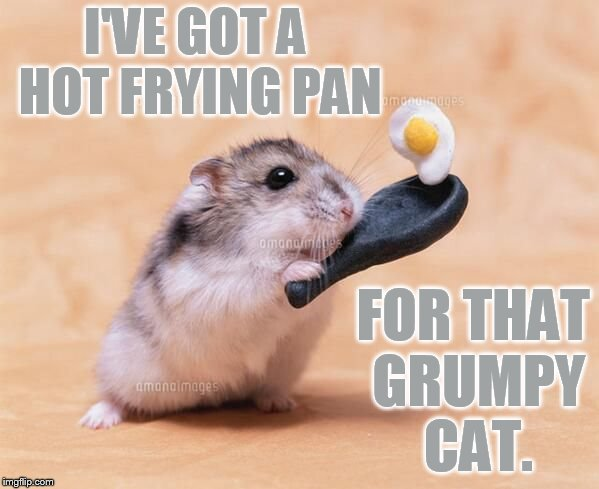 I'VE GOT A HOT FRYING PAN FOR THAT GRUMPY CAT. | made w/ Imgflip meme maker