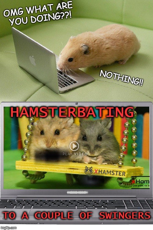 I think i'm on the wrong site  | OMG WHAT ARE YOU DOING??! TO A COUPLE OF SWINGERS NOTHING!! HAMSTERBATING | image tagged in hamster weekend,loyalsockxhamster,memes,funny,animals | made w/ Imgflip meme maker