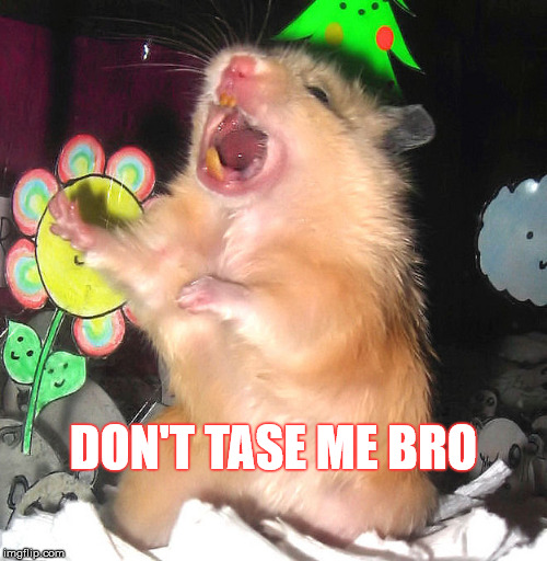 Hamster Weekend July 6-8, a bachmemeguy2, 1forpeace & Shen_Hiroku_Nagato event! | DON'T TASE ME BRO | image tagged in memes,hamster weekend,don't tase me bro,hamster | made w/ Imgflip meme maker