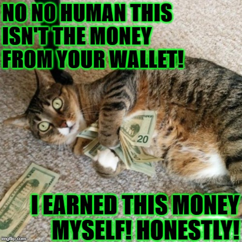 NO NO HUMAN THIS ISN'T THE MONEY FROM YOUR WALLET! I EARNED THIS MONEY MYSELF! HONESTLY! | image tagged in thief cat | made w/ Imgflip meme maker