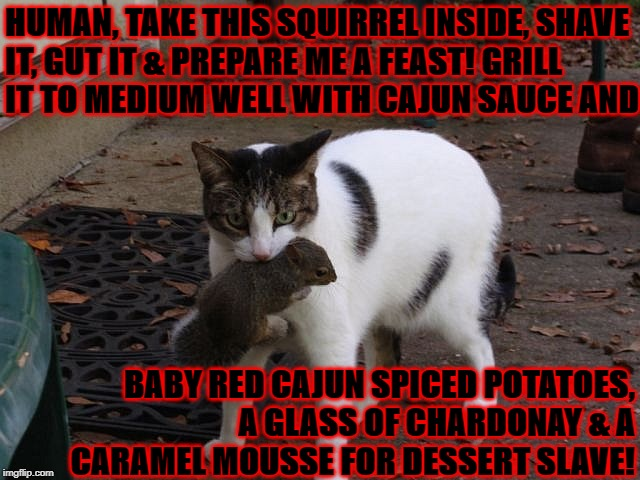 HUMAN, TAKE THIS SQUIRREL INSIDE, SHAVE IT, GUT IT & PREPARE ME A FEAST! GRILL IT TO MEDIUM WELL WITH CAJUN SAUCE AND BABY RED CAJUN SPICED  | image tagged in cook me dinner slave | made w/ Imgflip meme maker