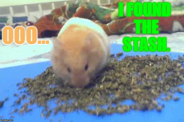Hamster Weekend July 6-8 a bachmemeguy2, 1forpeace, and Shen_Hiroku_Nagato event | I FOUND THE STASH. OOO... | image tagged in memes,hamster weekend,found,stash,eating,marijuana | made w/ Imgflip meme maker