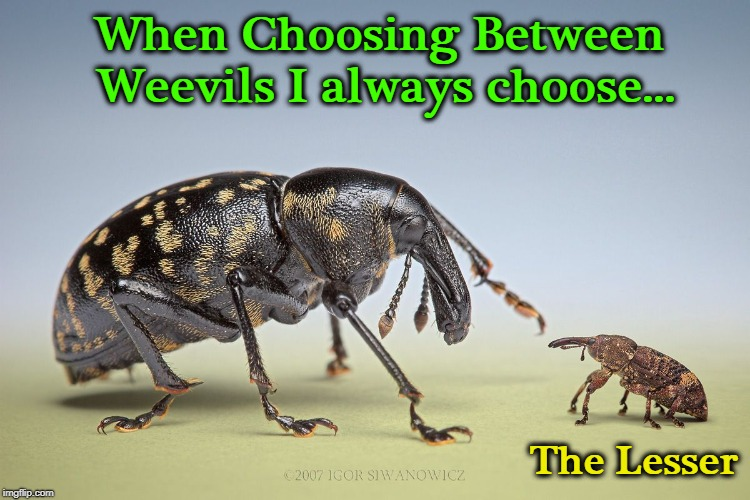 Size DOES Make a Difference | When Choosing Between Weevils I always choose... The Lesser | image tagged in vince vance,boll weevils,the lesser of two evils,cotton,play on words,bad puns | made w/ Imgflip meme maker