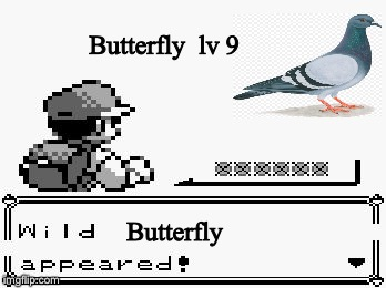 Is this a butterfly? | Butterfly  lv 9 Butterfly | image tagged in pokemon appears | made w/ Imgflip meme maker