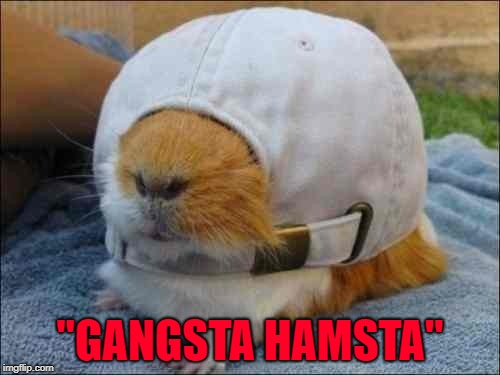 "Hamster Weekend July 6-8, a bachmemeguy2, 1forpeace & Shen_Hiroku_Nagato event. |  ""GANGSTA HAMSTA"" 