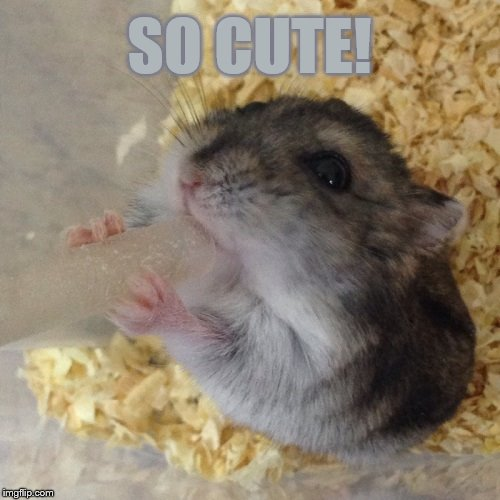 SO CUTE! | made w/ Imgflip meme maker