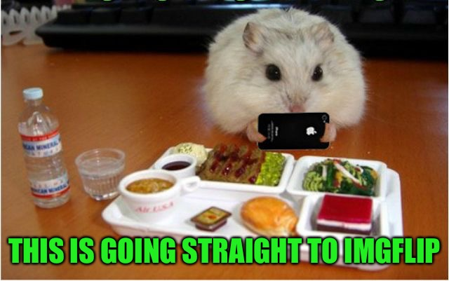 Hamster on imgflip  | THIS IS GOING STRAIGHT TO IMGFLIP | image tagged in imgflip hamster,memes,hamster weekend | made w/ Imgflip meme maker