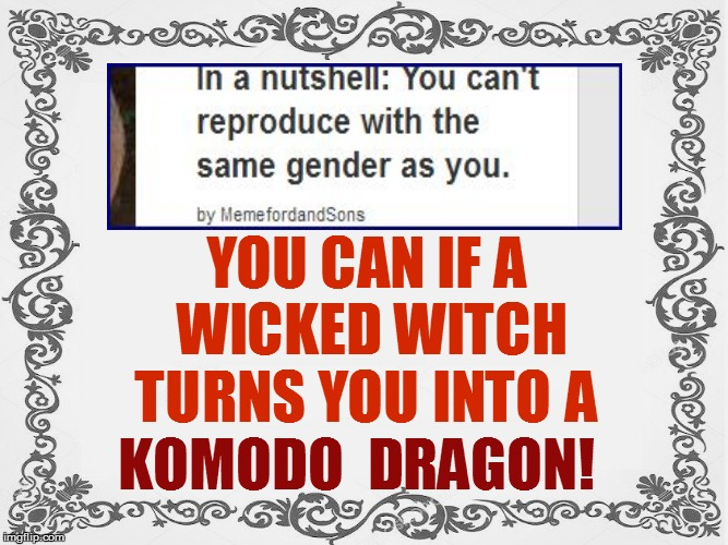 KOMODO  DRAGON! YOU CAN IF A WICKED WITCH TURNS YOU INTO A | made w/ Imgflip meme maker