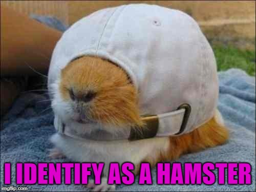 I IDENTIFY AS A HAMSTER | made w/ Imgflip meme maker