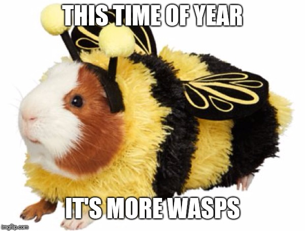 THIS TIME OF YEAR IT'S MORE WASPS | made w/ Imgflip meme maker