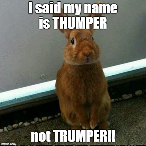 I said my name is THUMPER not TRUMPER!! | I said my name is THUMPER not TRUMPER!! | image tagged in donald trump,trump | made w/ Imgflip meme maker