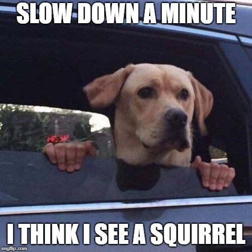Dog Day Afternoon Snack | SLOW DOWN A MINUTE I THINK I SEE A SQUIRREL | image tagged in memes | made w/ Imgflip meme maker