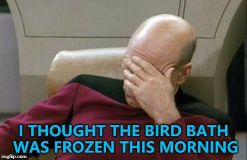 It was just for a second. It was the way the light was hitting it... :) | I THOUGHT THE BIRD BATH WAS FROZEN THIS MORNING | image tagged in memes,captain picard facepalm,weather,trick of the light | made w/ Imgflip meme maker