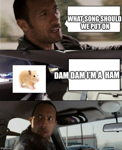 Dam dam I'm a ham | WHAT SONG SHOULD WE PUT ON DAM DAM I'M A HAM | image tagged in the rock driving blank 2,hamster,hamster weekend,songs | made w/ Imgflip meme maker