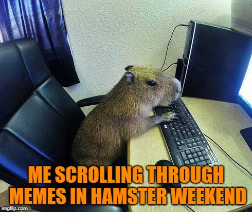 Hamster Weekend July 6-8, a bachmemeguy2, 1forpeace & Shen_Hiroku_Nagato event!  | ME SCROLLING THROUGH MEMES IN HAMSTER WEEKEND | image tagged in memes,hamster weekend | made w/ Imgflip meme maker