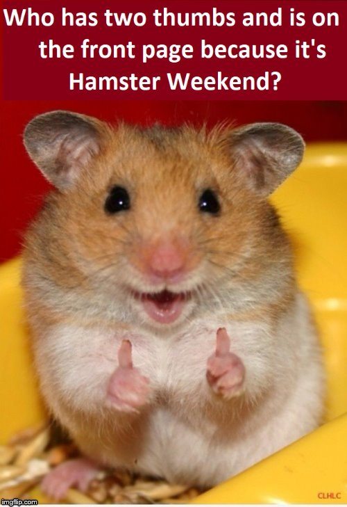 Hamster Weekend July 6-8, a bachmemeguy2, 1forpeace & Shen_Hiroku_Nagato Event | image tagged in thumbs up hamster,hamster,hamster weekend,two thumbs up | made w/ Imgflip meme maker
