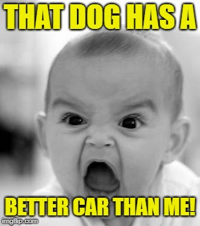 Angry Baby Meme | THAT DOG HAS A BETTER CAR THAN ME! | image tagged in memes,angry baby | made w/ Imgflip meme maker