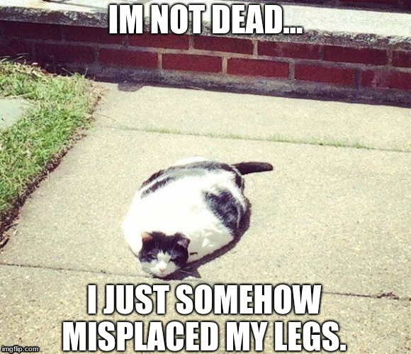 mishap | IM NOT DEAD... I JUST SOMEHOW MISPLACED MY LEGS. | image tagged in fat cat | made w/ Imgflip meme maker