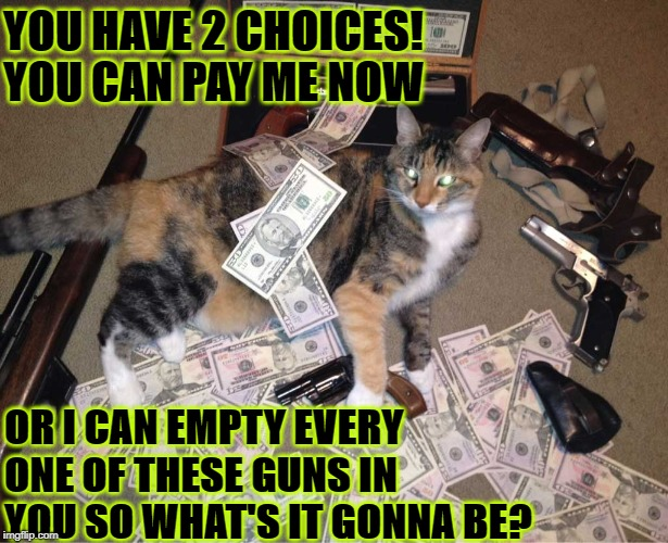 ORGANIZED CRIME CAT | YOU HAVE 2 CHOICES! YOU CAN PAY ME NOW OR I CAN EMPTY EVERY ONE OF THESE GUNS IN YOU SO WHAT'S IT GONNA BE? | image tagged in organized crime cat | made w/ Imgflip meme maker