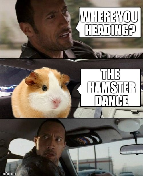 Come On Everybody ... Hamster Weekend, July 6-8, a bachmemeguy2, 1forpeace & Shen_Hiroku_Nagato event. | WHERE YOU HEADING? THE HAMSTER DANCE | image tagged in the rock and hammy,hamster weekend | made w/ Imgflip meme maker