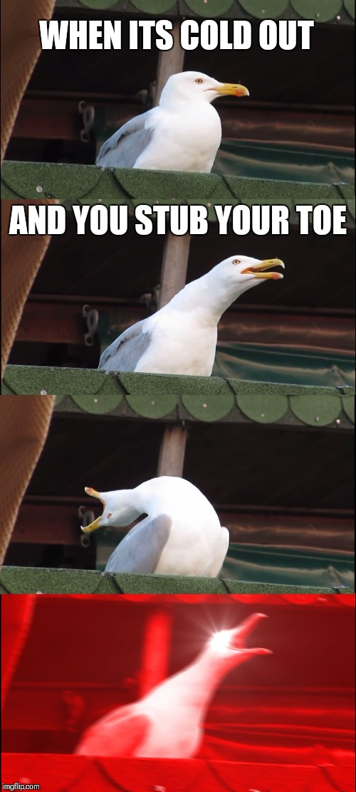 Inhaling Seagull Meme | WHEN ITS COLD OUT AND YOU STUB YOUR TOE | image tagged in memes,inhaling seagull | made w/ Imgflip meme maker