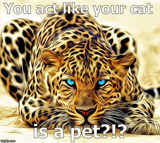 big cat | You act like your cat is a pet?!? | image tagged in big cat | made w/ Imgflip meme maker