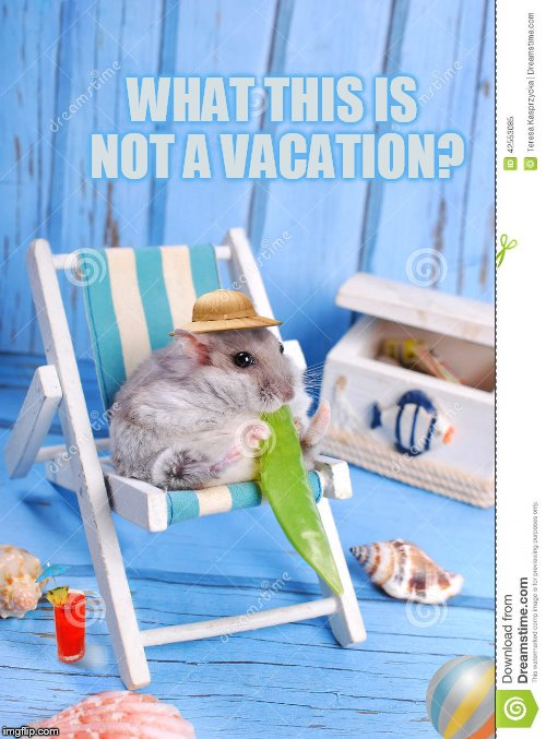 WHAT THIS IS NOT A VACATION? | made w/ Imgflip meme maker