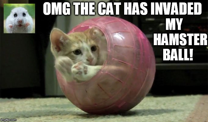 Hamster Weekend July 6-8 a bachmemeguy2, 1forpeace, and Shen_Hiroku_Nagato event | OMG THE CAT HAS INVADED MY     HAMSTER BALL! | image tagged in memes,hamster weekend,cat,hamster,ball,funny | made w/ Imgflip meme maker