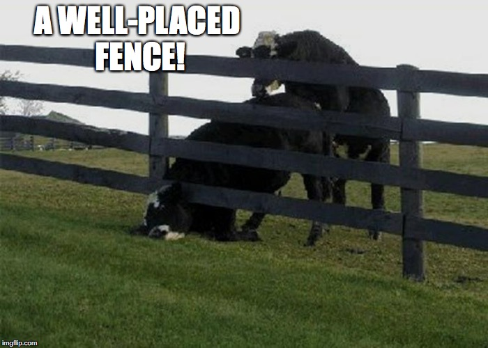 A WELL-PLACED FENCE! | made w/ Imgflip meme maker
