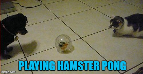 Hamster Weekend July 6-8, a bachmemeguy2, 1forpeace & Shen_Hiroku_Nagato event! | PLAYING HAMSTER PONG | image tagged in hamster pong,memes,hamster weekend,funny,hamsters,cat vs dog | made w/ Imgflip meme maker