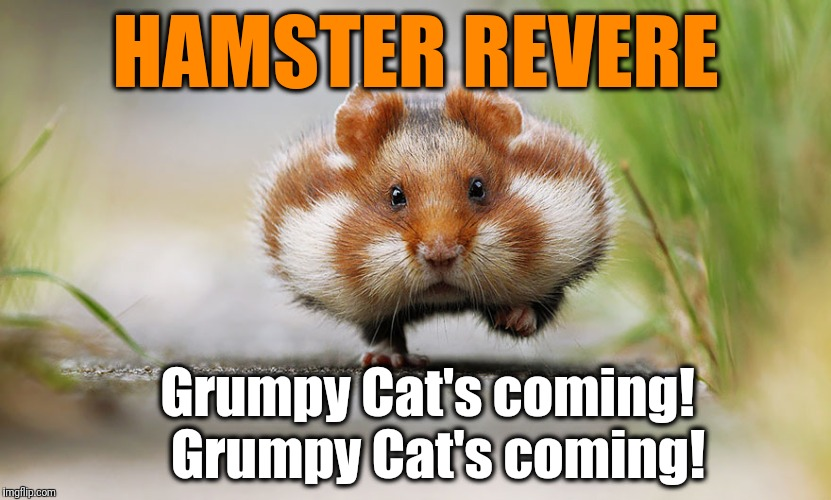 Hamster Weekend July 6-8, a bachmemeguy2, 1forpeace & Shen_Hiroku_Nagato event | HAMSTER REVERE Grumpy Cat's coming!  Grumpy Cat's coming! | image tagged in grumpy cat | made w/ Imgflip meme maker