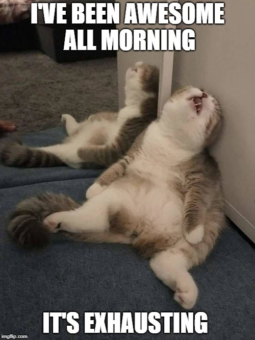awesome cat | I'VE BEEN AWESOME ALL MORNING IT'S EXHAUSTING | image tagged in awesome,cat | made w/ Imgflip meme maker