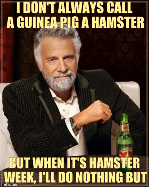 The Most Interesting Man In The World Meme | I DON'T ALWAYS CALL A GUINEA PIG A HAMSTER BUT WHEN IT'S HAMSTER WEEK, I'LL DO NOTHING BUT | image tagged in memes,the most interesting man in the world | made w/ Imgflip meme maker