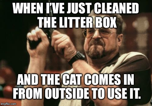 John Goodman | WHEN I'VE JUST CLEANED THE LITTER BOX AND THE CAT COMES IN FROM OUTSIDE TO USE IT. | image tagged in john goodman | made w/ Imgflip meme maker