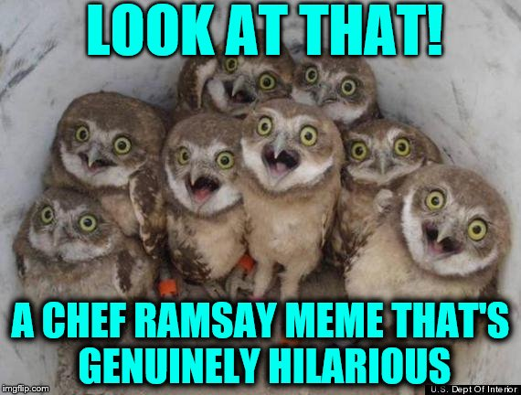 Amazed Owls | LOOK AT THAT! A CHEF RAMSAY MEME THAT'S GENUINELY HILARIOUS | image tagged in amazed owls | made w/ Imgflip meme maker