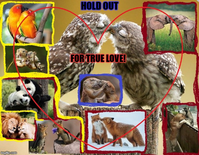 True Love! | HOLD OUT FOR TRUE LOVE! | image tagged in true love | made w/ Imgflip meme maker